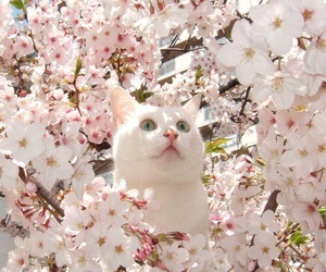blossom, cat, and cherry image