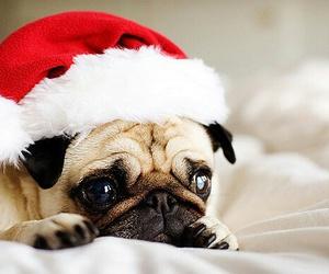 christmas, dog, and cute image