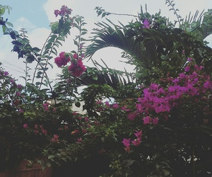 flower, nature, and sky image