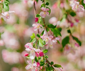 love nature pink flowrrs image