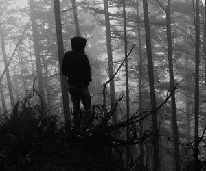 black and white, nature, and pale image