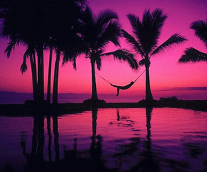 palms, paradise, and relax image