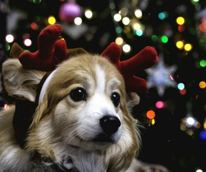 christmas, holiday, and dog image