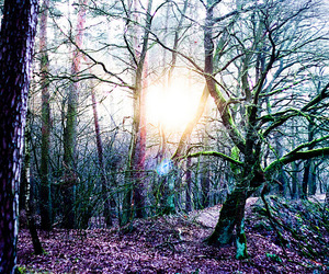 forest, light, and sun image
