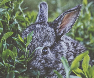 grass, little, and rabbit image