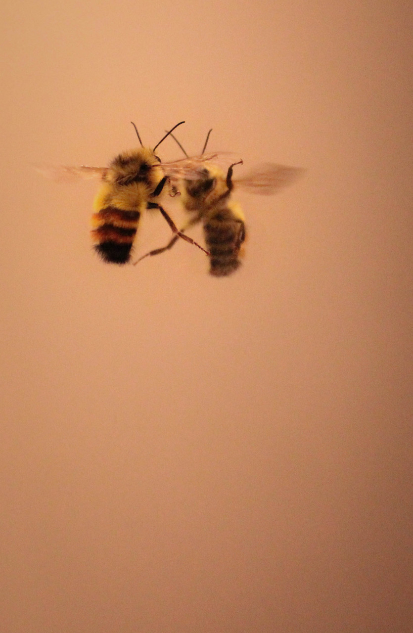 bee and yellow image