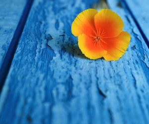 flower and blue image