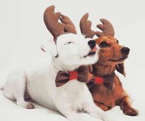 christmas, lovely, and puppies image