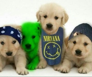 5sos and puppy image