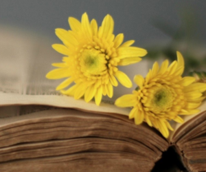 flowers, book, and headers image
