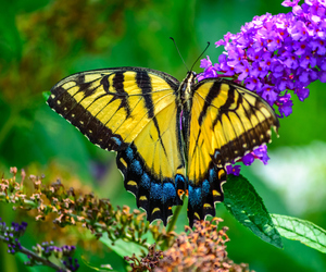 beautiful, butterfly, and spring image