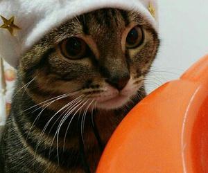 cat and ️chrismas image