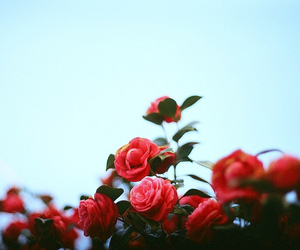 50mm, flower, and iso200 image