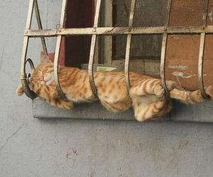 cat, funny, and sleep image