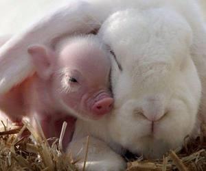 animal, pig, and bunny image