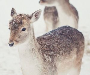 adorable and deer image