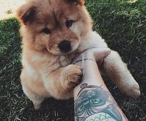 dog, cute, and tattoo image