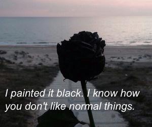 black, rose, and ahs image