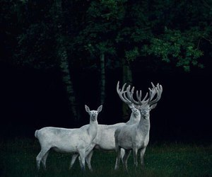beauty, exo, and deer image