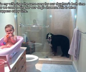 funny, baby, and dog image