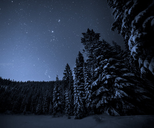 night, snow, and trees image