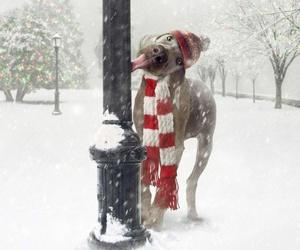 dog, winter, and christmas image