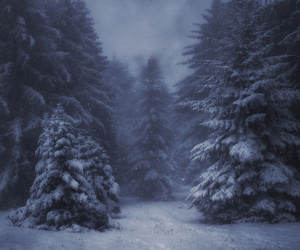 forest, snow, and trees image