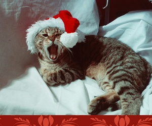 cat, christmas, and merrychristmas image