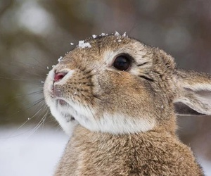 rabbit, animal, and snow image