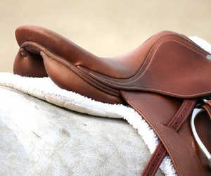 brown, saddle, and equestrian image
