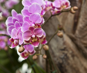 cuba, flower, and orchid image