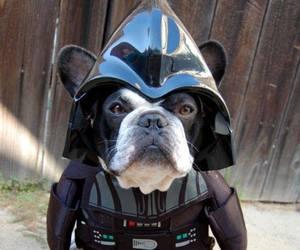 dog, star wars, and darth vader image