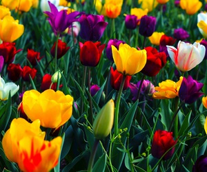 colorful, purple flower, and flowers image