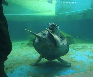 funny, turtle, and animal image