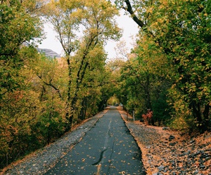 autumn, road, and vertical image