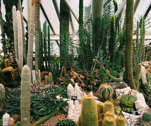 biology, cactus, and greenhouse image