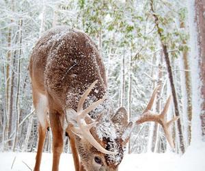 winter, snow, and animal image
