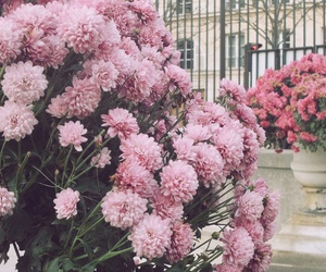 background, cover, and flowers image