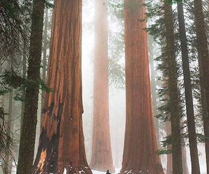 california, forest, and travel image