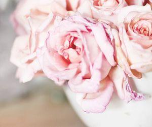 beautiful and rose image