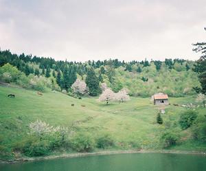 vintage, indie, and nature image