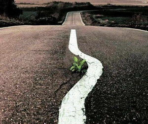road, nature, and plants image