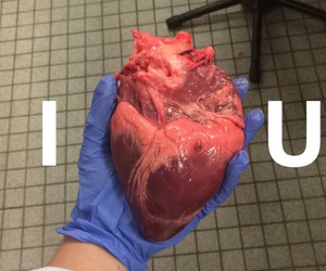 heart, human, and lové image