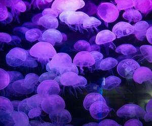 purple, jellyfish, and aesthetic image