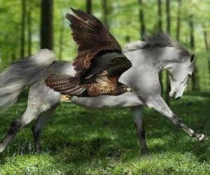 horse, animals, and eagle image
