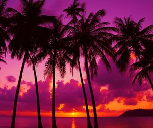 amazing, palm trees, and places image