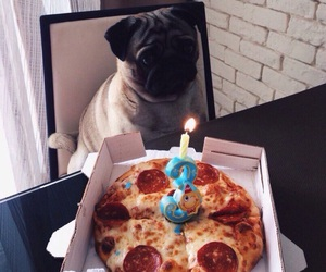 dog and pizza image