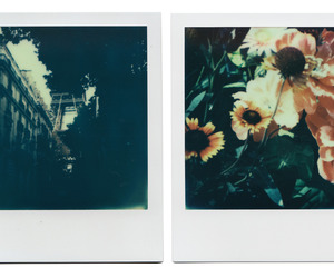art, polaroids, and flowers image