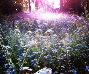 flowers and forget-me-nots image