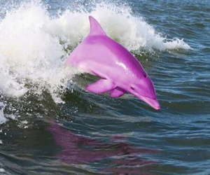 beautiful and dolphin image
